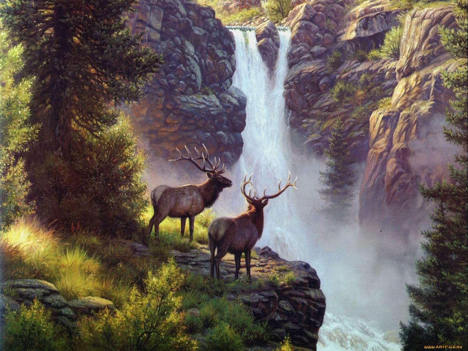 Рисунки животных или природы